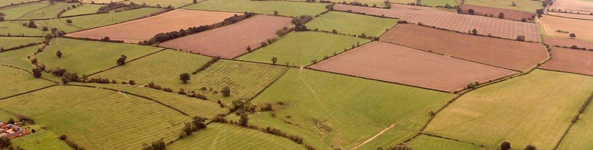 Calverton's field patchwork