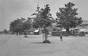 Market Pl (Trees)_edited-1