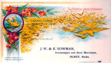 canaryguanow