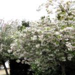 Blossom bonanza