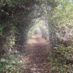 The tunnel in autumn