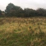 Creeping field thistles
