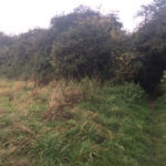 Neglected Hedgerow #2