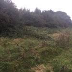Neglected Hedgerow #1