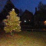 Decorated tree at night