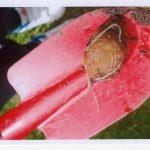 Slug on red trowel
