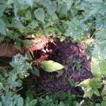 Fox hole found in my garden