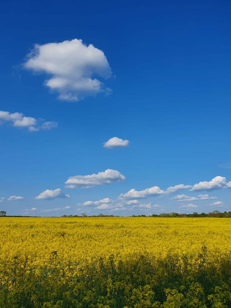 Spring Field - Sherington